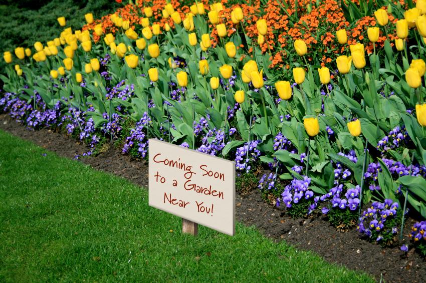 Spring Gardening Tips