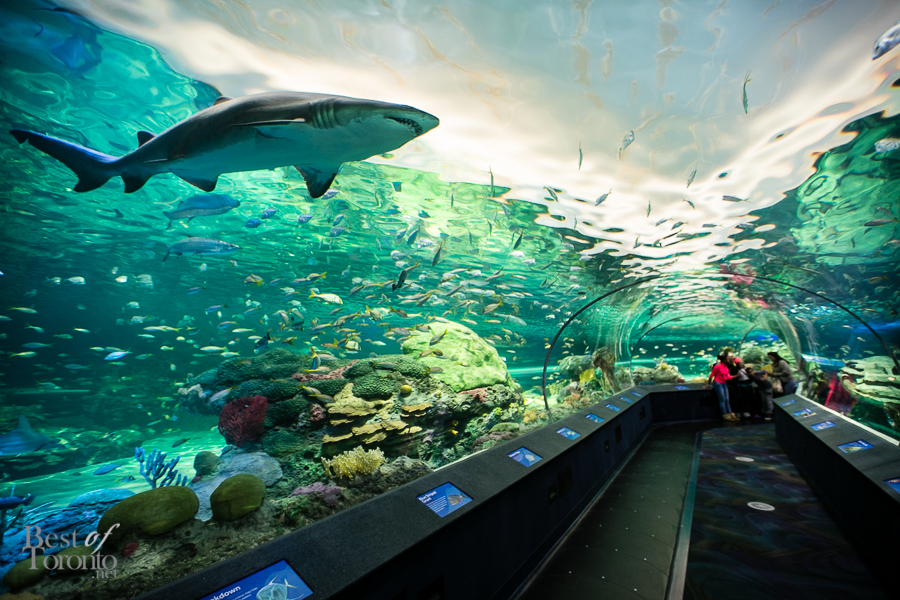 Discover your own underwater adventure at Ripley's Aquarium of  Canada
