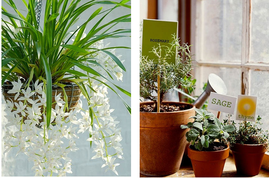 Indoor plants always bring a feeling of spring into the home.