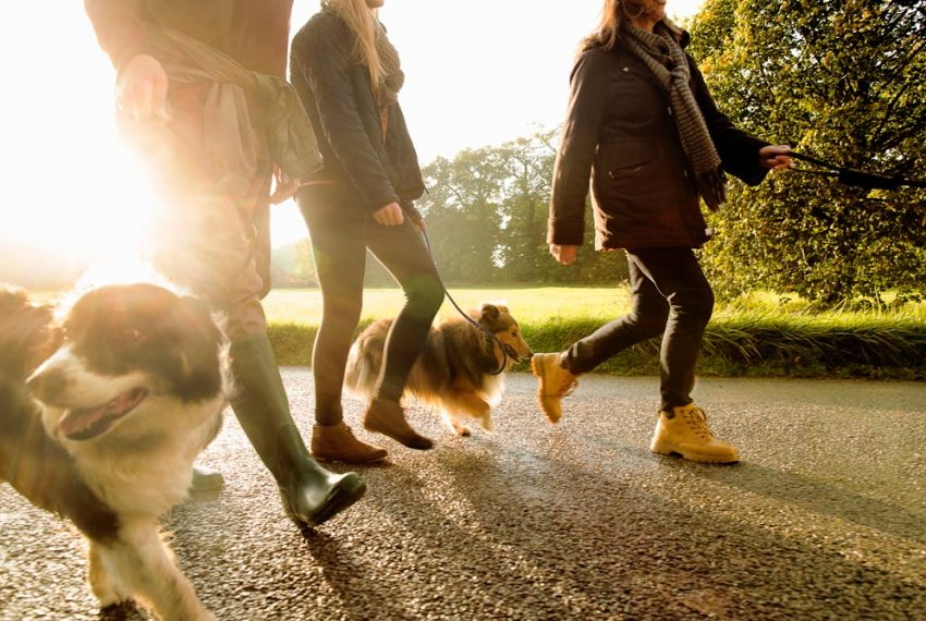 Dog-walking-GettyImages-475149513