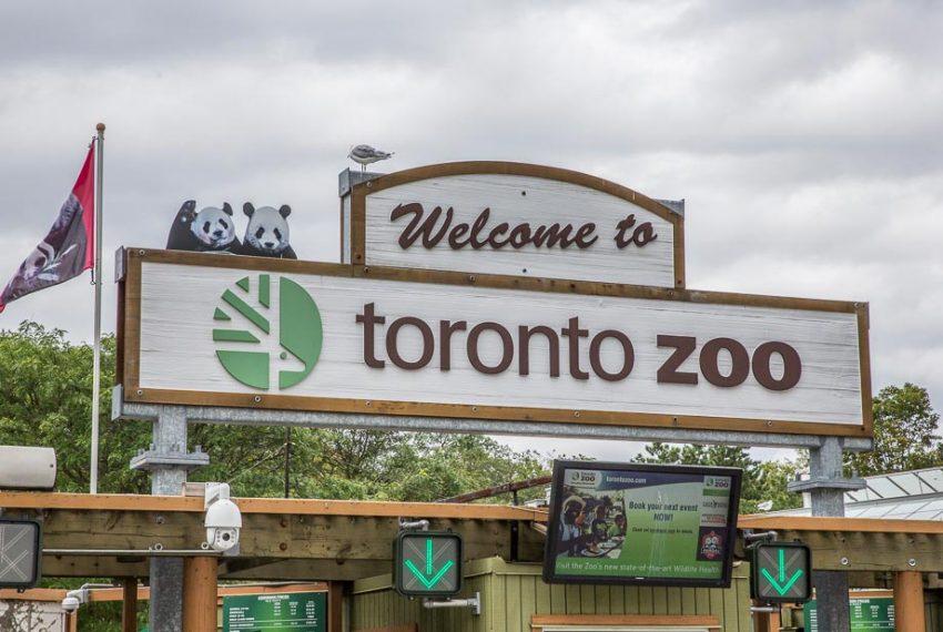 Toronto-Zoo-(4-of-7)